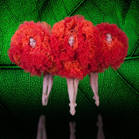 Three female dancers peek through voluminous orange tutus that make them appear as flowers set off against a bright green leaf motif background
